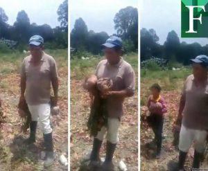 «Toda la remolacha la estamos botando»: la indignación de un agricultor por las condiciones del campo venezolano
