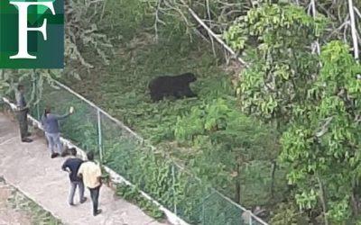 Oso frontino se escapó de su zona de cautiverio en el Parque Bararida de Barquisimeto