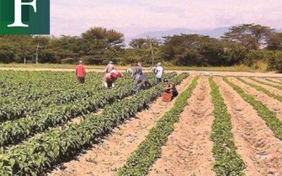 Producción agrícola en Lara podría caer 90% este año