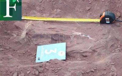 Hallaron fósil de dinosaurio que podría ser el animal terrestre más grande de la historia